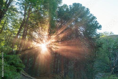 Sunny beams