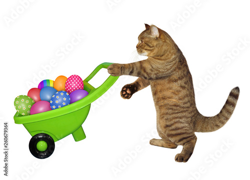 Foto The cat is pushing the green wheelbarrow with easter eggs