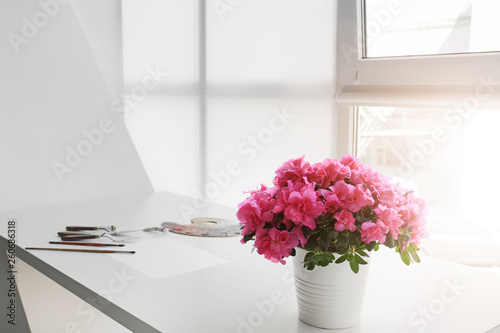 Montage in der Fensternische Azalee Beautiful blooming azalea in pot on table
