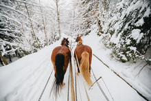 Running Beautiful Brown Horses...