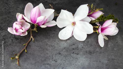 Tuinposter Magnolia Wunderschöne blühende Magnolien - anthrazit