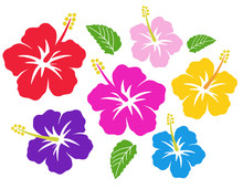 Hibiscus Icon Set