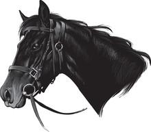 Silhouette Horse On White Background, Vector Illustration
