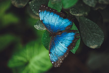 Beautiful Butterfly Sits On Th...