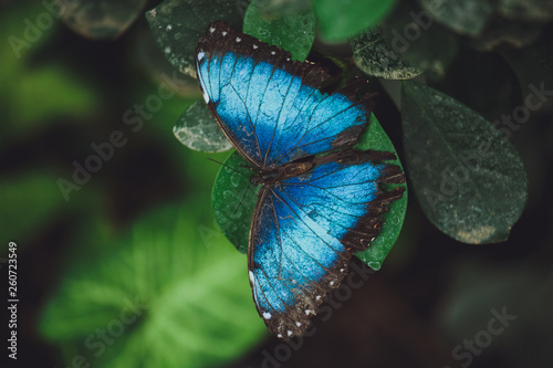 Fotografie, Obraz  Beautiful butterfly sits on the green leaves of a tree branch