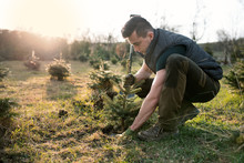 Young Man Plant A Small Tree I...