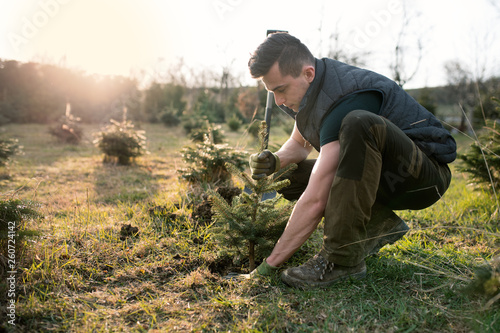 Cuadros en Lienzo Young man plant a small tree in the garden