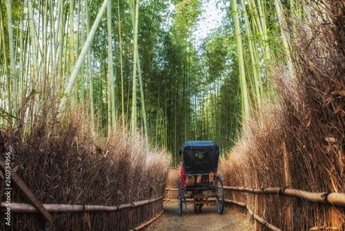 Fotografie, Obraz A rickshaw trip inside the bamboo grove