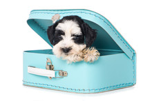 Cute Puppy In A Blue Suitcase Isolated On White Background