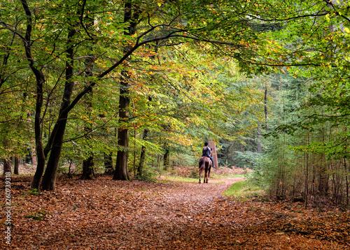 Foto op Canvas Weg in bos Rückansicht auf Reiterin bei Herbstfärbung im Wald