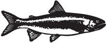 Trout Fish  - Retro Ad Art Ill...