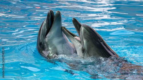 Foto op Plexiglas Dolfijnen Two dolphins cuddle in the water
