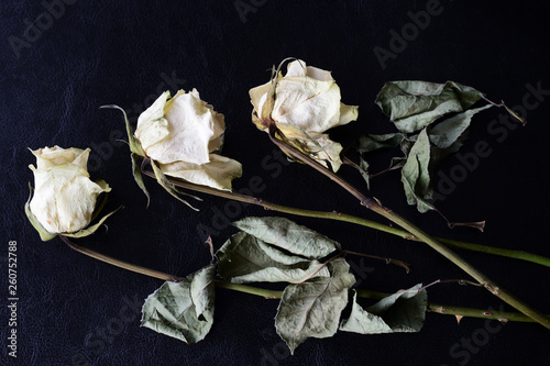 Photo  Dried white roses on a dark background close up