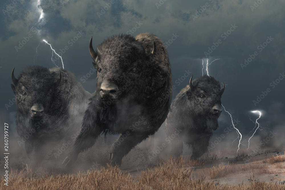 Fototapety, obrazy: Three buffalo stampede accross the North American prairie. Driven by the flasing lightning and booming thunder of a storm, these bison raise a cloud of dust as they run.  3D Rendering