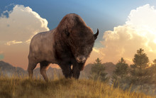 A Buffalo (bison) Stands On A Grassy Hill And Looks Back At You.  Behind It Lies A Valley Full Of Fir Trees And The Rising Sun. 3D Rendering