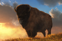 An American Buffalo Stands On A Grassy Hill.  Behind The Massive Fur Covered Bison, The Sun Sits Low On The Horizon. 3D Rendering
