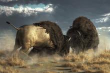 Two Massive American Buffalo G...