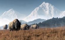 A Herd Of Bison Grazes In A Va...