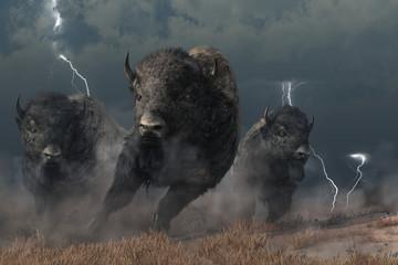 Three buffalo stampede accr...