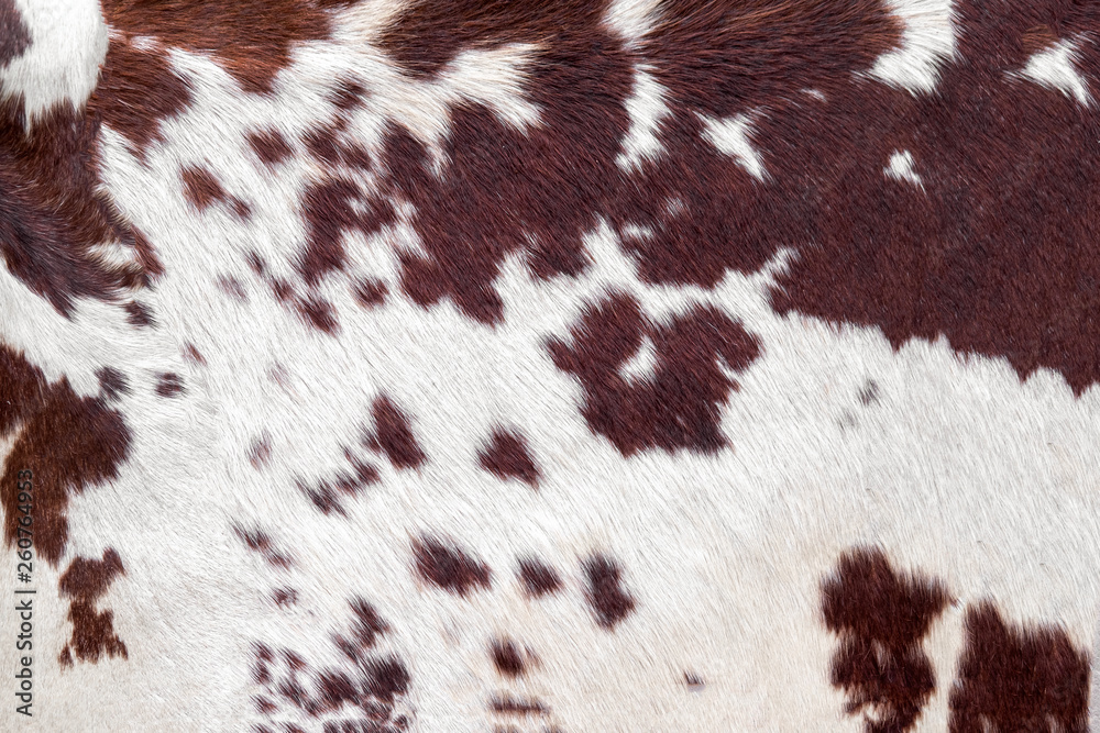 Fototapeta Cowhide for use as a background in full frame