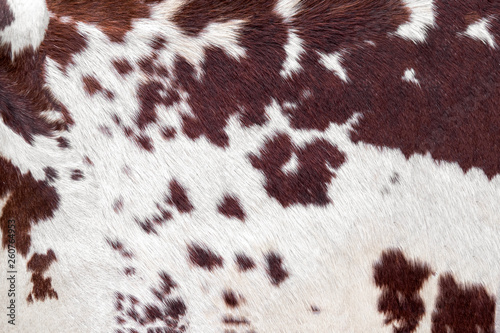 Fotografia Cowhide for use as a background in full frame