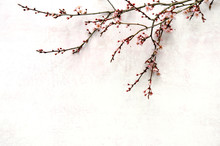 Spring Blooming Branch Lying Down On Pink Pastel Background