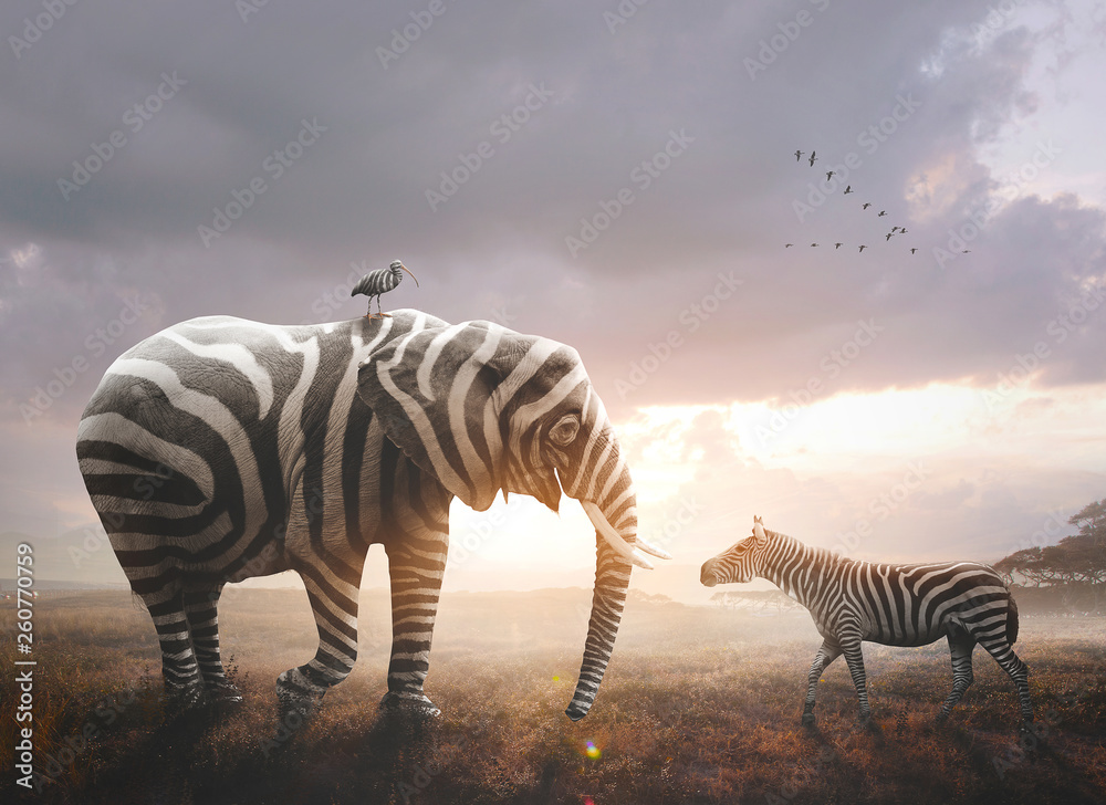 Fototapety, obrazy: Elephant with zebra stripes
