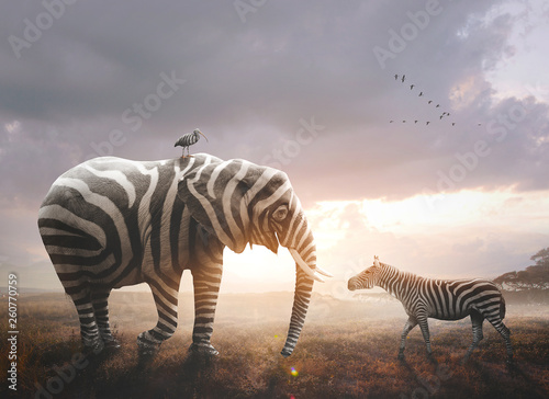 Poster de jardin Zebra Elephant with zebra stripes