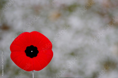 Poster Klaprozen Red poppy pin on spotty snowy background