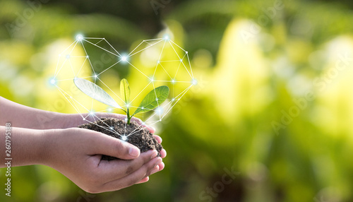 Fotomural The environment in the hands of the tree planted seedlings is protected by the heart