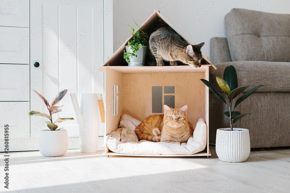 Fototapeta Cat in wooden cat house
