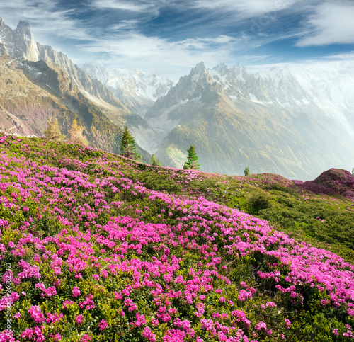 Autocollant pour porte Bleu jean Alpine rhododendrons on the mountain fields of Chamonix