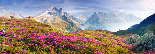 Spoed Foto op Canvas Alpen Alpine rhododendrons on the mountain fields of Chamonix