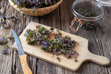 Cutting Up Ground-ivy To Prepare Homemade Syrup