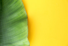 Fresh Green Banana Leaf On Color Background, Top View With Space For Text. Tropical Foliage