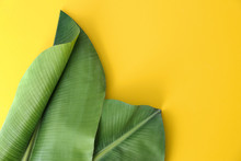 Fresh Green Banana Leaves On Color Background, Flat Lay With Space For Text. Tropical Foliage
