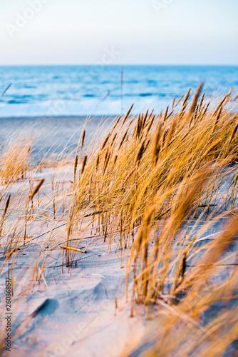 Fototapeta Coast of the Baltic Sea at sunset. Sand dunes, plants and water splashes close-up. Latvia obraz