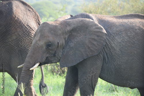 Photo  elephant in the wild