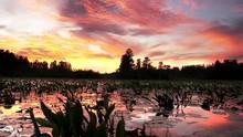 Sunset At Okefenokee Swamp As ...