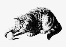 Cat Playing With A Ball