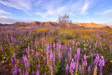 Beautiful Wildflower At Sunset...