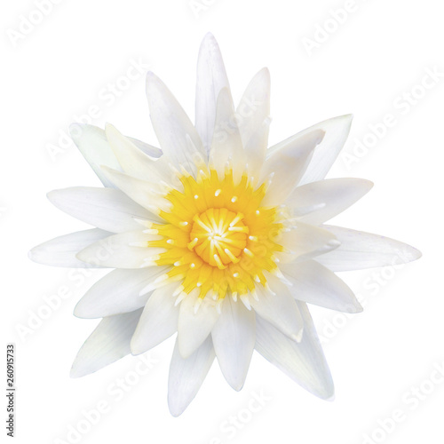 Foto auf AluDibond Wasserlilien top view white lotus isolated on white background with clipping path