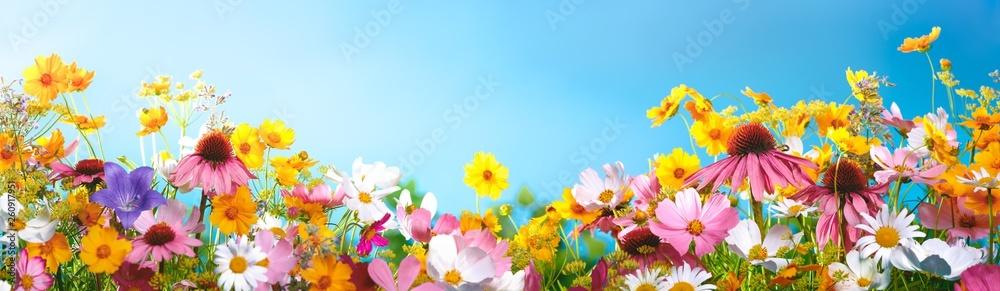 Fototapety, obrazy: Spring flowers