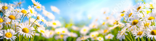 Photo Stands Floral Chamomile flower