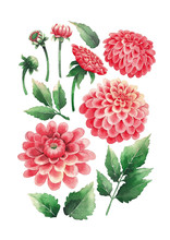 Watercolor Bouquet Of Dahlias Flowers And Leaves
