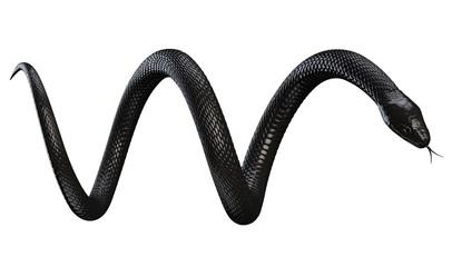 Crna zmija izolirana na bijeloj pozadini. 3D ilustracija