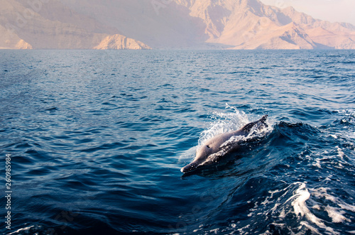 Fotografie, Obraz  dolphin rising above crystal clear water