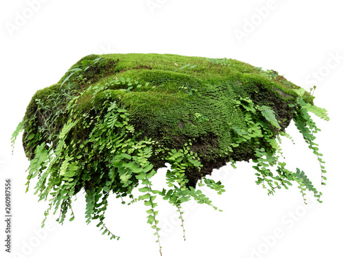 Cuadros en Lienzo Floating rock island covered by green moss, grass and fern, isolated on white background