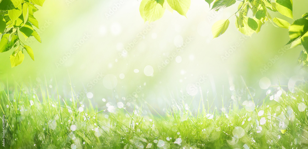 Fototapety, obrazy: Spring summer background with a frame of grass and leaves on nature. Juicy lush green grass on meadow with drops of water dew sparkle in morning light outdoors close-up, copy space, wide format.