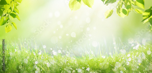 Obraz Spring summer background with a frame of grass and leaves on nature. Juicy lush green grass on meadow with drops of water dew sparkle in morning light outdoors close-up, copy space, wide format. - fototapety do salonu